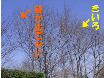 10_0414_eno_muku1.jpg