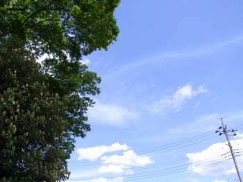 10_0516_shrine05.jpg