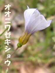 10_0618_niwazekisho05.jpg