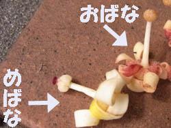 10_0714_aogiri3.jpg