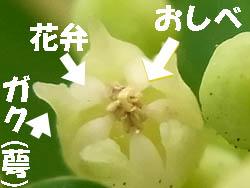 10_0829_kumayanagi6.jpg