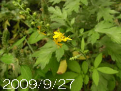 10_1006_kin_mizuhiki3.jpg