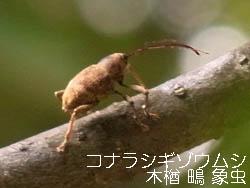 10_1007_zoumusi3.jpg