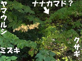 10_1117_zokibayasi2.jpg