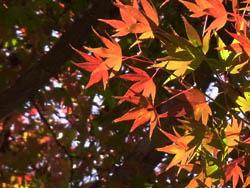10_1129_iroha_k3.jpg