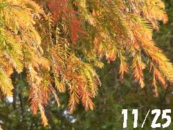 10_1202_rakuusho1.jpg
