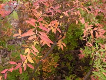 10_1224_yukiyanagi1.jpg
