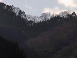 11_0115_yamanami.jpg