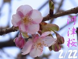 11_0222_kawadu_z.jpg