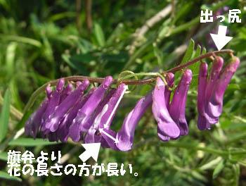 11_0424_n_kusafuji05.jpg
