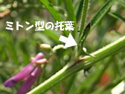 11_0424_n_kusafuji06.jpg