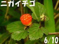 11_0708_niga_itigo1.jpg