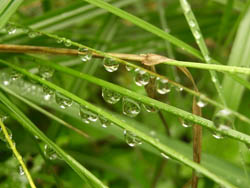 11_0805_raindrops.jpg
