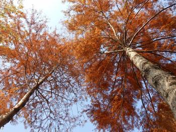 11_1213_meta_raku2.jpg