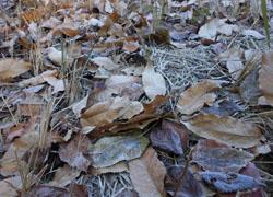 11_1222_frost3.jpg