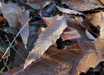 11_1222_frost5.jpg