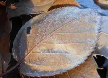 11_1222_frost6.jpg
