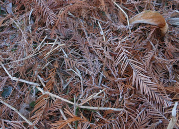 11_1222_frost7.jpg