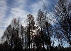 11_1223_tree.jpg