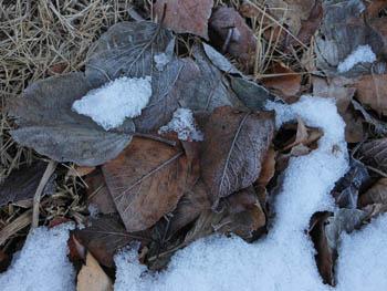12_0126_frost.jpg