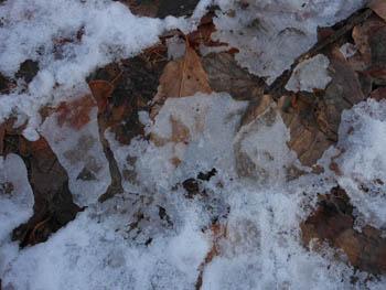 12_0126_snow05.jpg