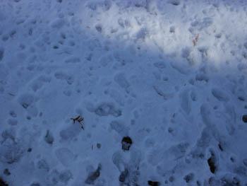 12_0126_snow06.jpg