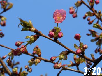 12_0321_kawadu_z1.jpg