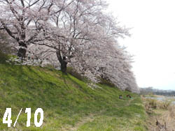 12_0415_kawara1.jpg