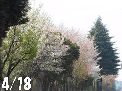 12_0425_park.jpg