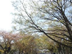 12_0427_enoki1.jpg