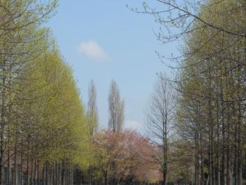 12_0428_yurinoki02.jpg