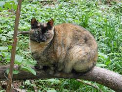 12_0612_cheshiercat.jpg