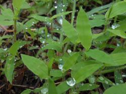 12_0613_raindrop8.jpg