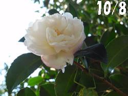 12_1027_kamakiri1.jpg