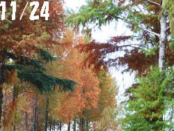 12_1212_meta_raku.jpg