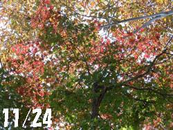 12_1213_kaede1.jpg