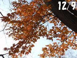 12_1226_akaside1.jpg