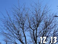 12_1227_sakura.jpg