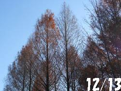 12_1229_meta_raku1.jpg