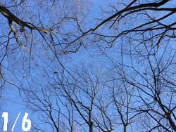 13_0108_sidenoki.jpg