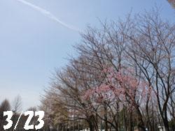 13_0403_sidare_z1.jpg