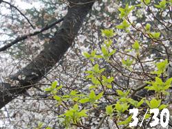13_0411_mizuki.jpg
