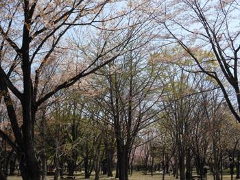 13_0417_icho1.jpg