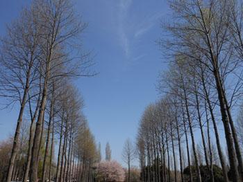13_0417_yurinoki5.jpg