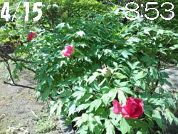 13_0507_botan1.jpg
