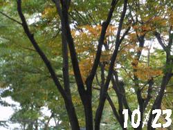 13_1101_keyaki.jpg