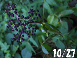 13_1106_nodake1.jpg