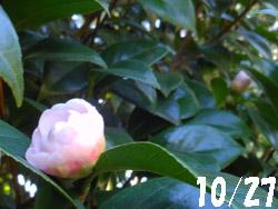 13_1107_otome_t1.jpg