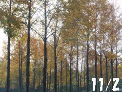13_1108_park1.jpg