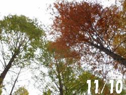 13_1119_meta_raku.jpg